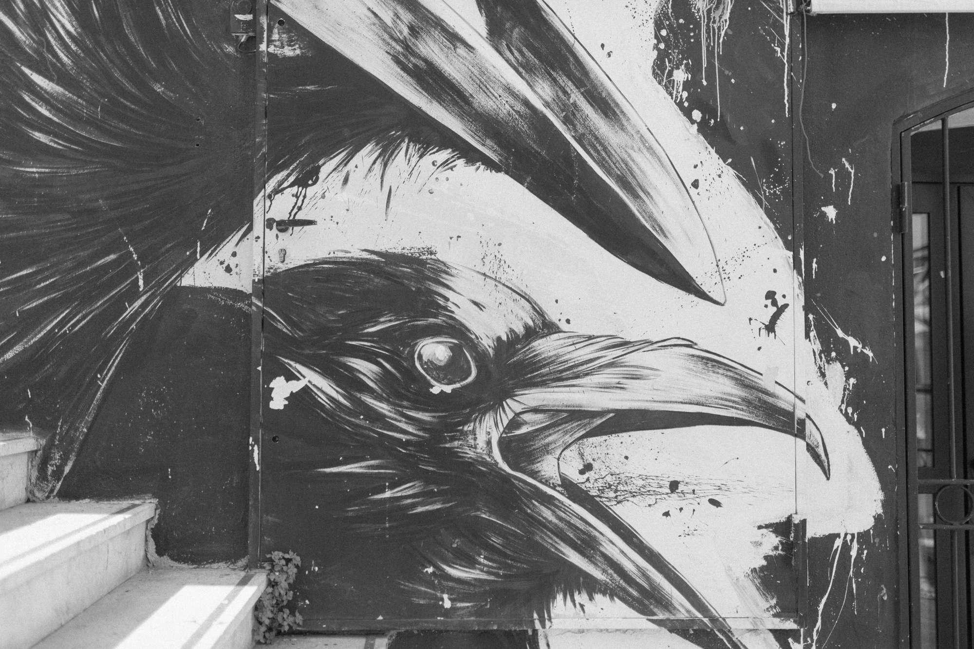 crow Sete